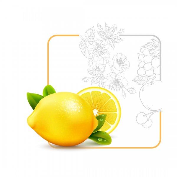 لیمو ترش ؛ از کاشت تا برداشت