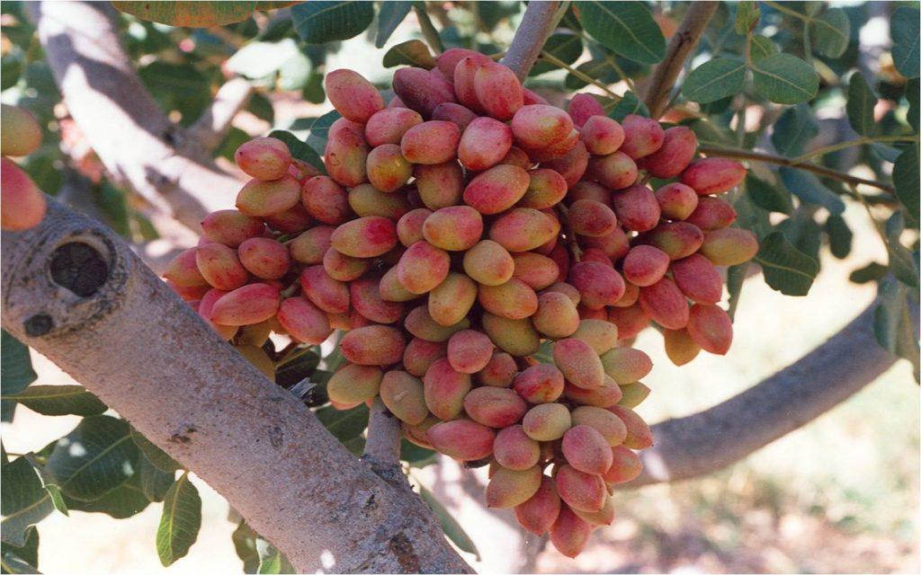 نقش کود مایع آمینو اسید فولامین در تسریع رشد گیاه
