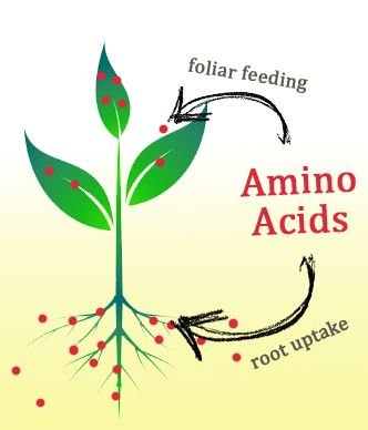 نقش کود مایع آمینو اسید فولامین در گیاهان