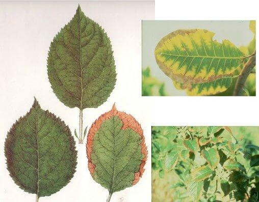 نقش پتاسیم در گیاهان
